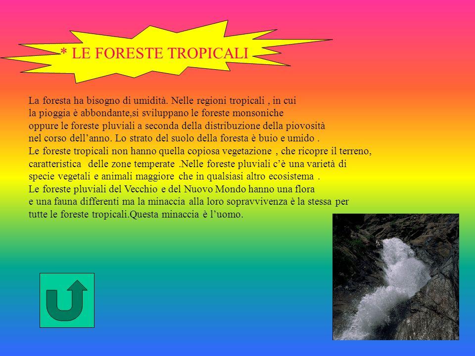 * LE FORESTE TROPICALI La foresta ha bisogno di umidità.