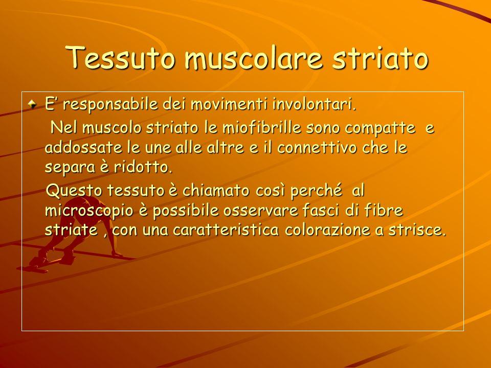 TESSUTI MUSCOLARI I muscoli hanno un rivestimento formato da cellule elastiche. I muscoli hanno un rivestimento formato da cellule elastiche. Fasci di