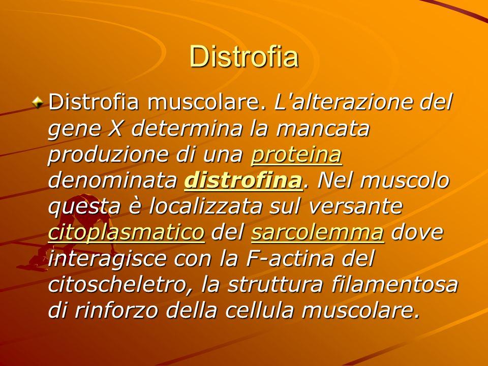 Distrofia muscolare Le forme più diffuse sono la distrofia muscolare di Duchenne e quella di Becker; esistono però un'infinità di forme intermedie, e