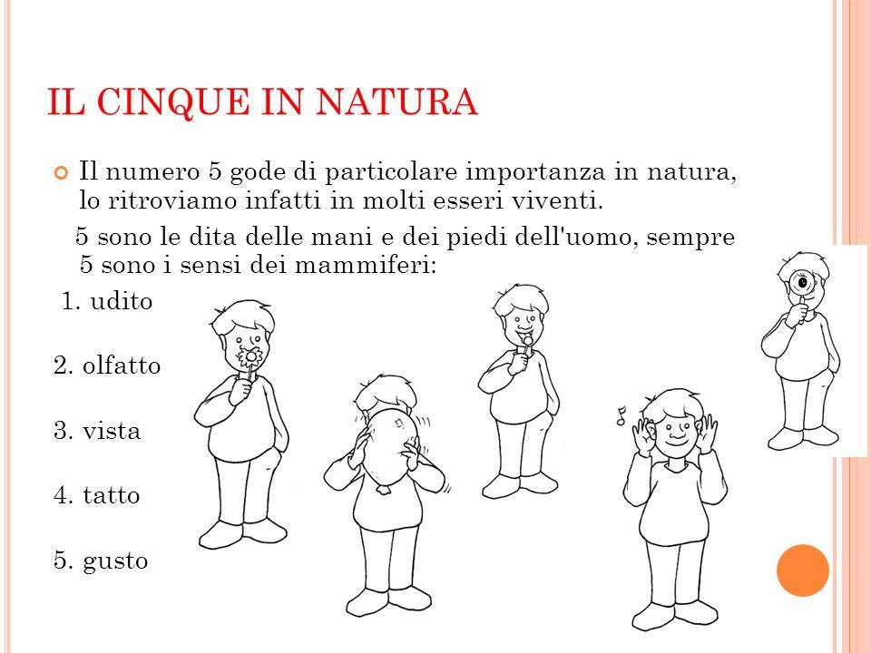 IL CINQUE IN NATURA Il numero 5 gode di particolare importanza in natura, lo ritroviamo infatti in molti esseri viventi. 5 sono le dita delle mani e d
