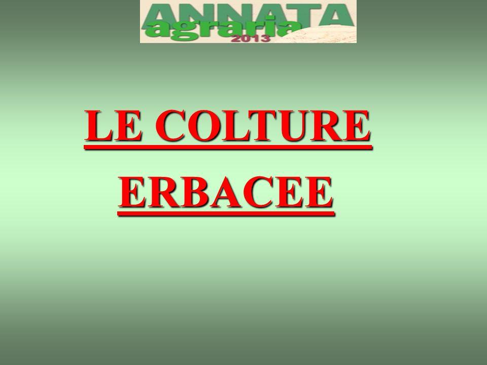 LE COLTURE ERBACEE ERBACEE