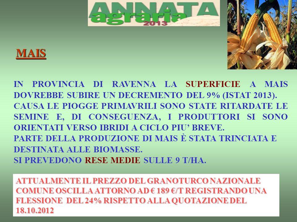 IN PROVINCIA DI RAVENNA LA SUPERFICIE A MAIS DOVREBBE SUBIRE UN DECREMENTO DEL 9% (ISTAT 2013).