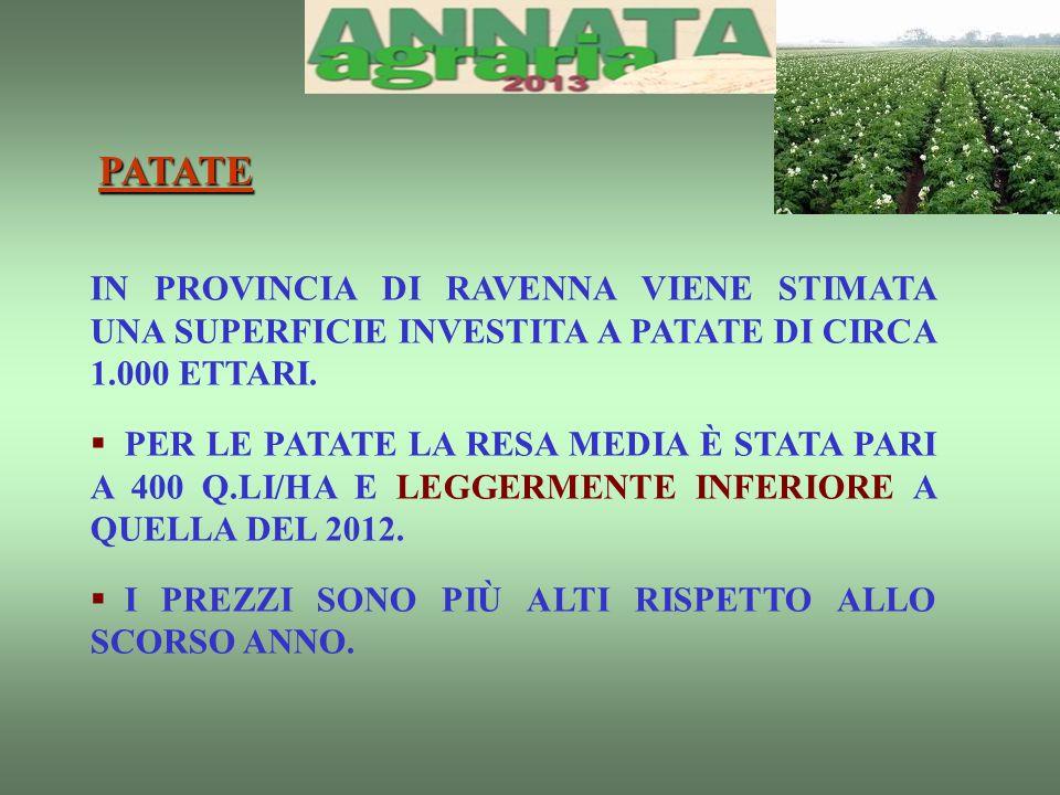 PATATE IN PROVINCIA DI RAVENNA VIENE STIMATA UNA SUPERFICIE INVESTITA A PATATE DI CIRCA 1.000 ETTARI.