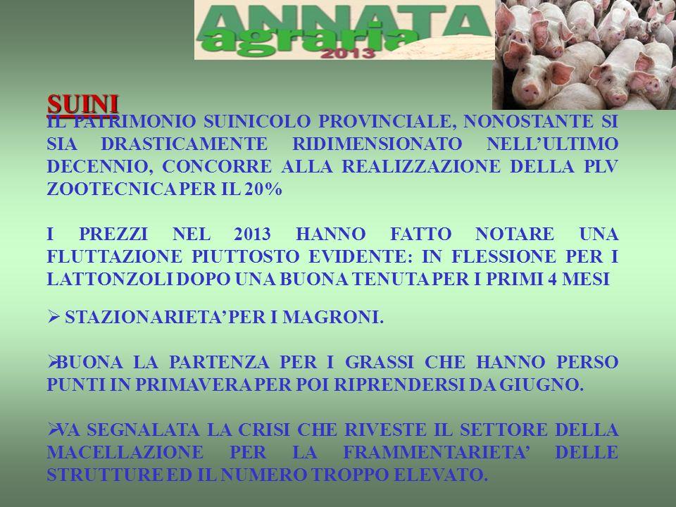 SUINI IL PATRIMONIO SUINICOLO PROVINCIALE, NONOSTANTE SI SIA DRASTICAMENTE RIDIMENSIONATO NELLULTIMO DECENNIO, CONCORRE ALLA REALIZZAZIONE DELLA PLV ZOOTECNICA PER IL 20% I PREZZI NEL 2013 HANNO FATTO NOTARE UNA FLUTTAZIONE PIUTTOSTO EVIDENTE: IN FLESSIONE PER I LATTONZOLI DOPO UNA BUONA TENUTA PER I PRIMI 4 MESI STAZIONARIETA PER I MAGRONI.