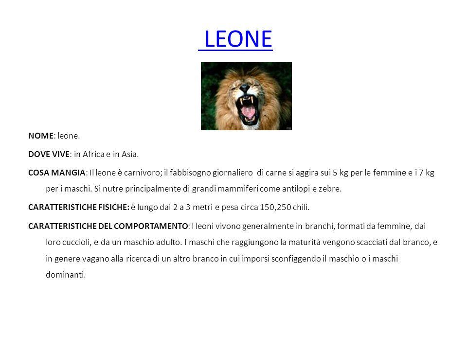 LEONE NOME: leone. DOVE VIVE: in Africa e in Asia. COSA MANGIA: Il leone è carnivoro; il fabbisogno giornaliero di carne si aggira sui 5 kg per le fem