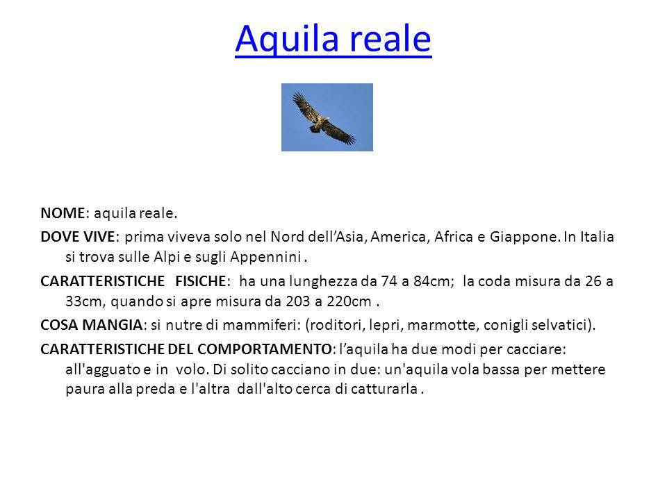 Aquila reale NOME: aquila reale. DOVE VIVE: prima viveva solo nel Nord dellAsia, America, Africa e Giappone. In Italia si trova sulle Alpi e sugli App