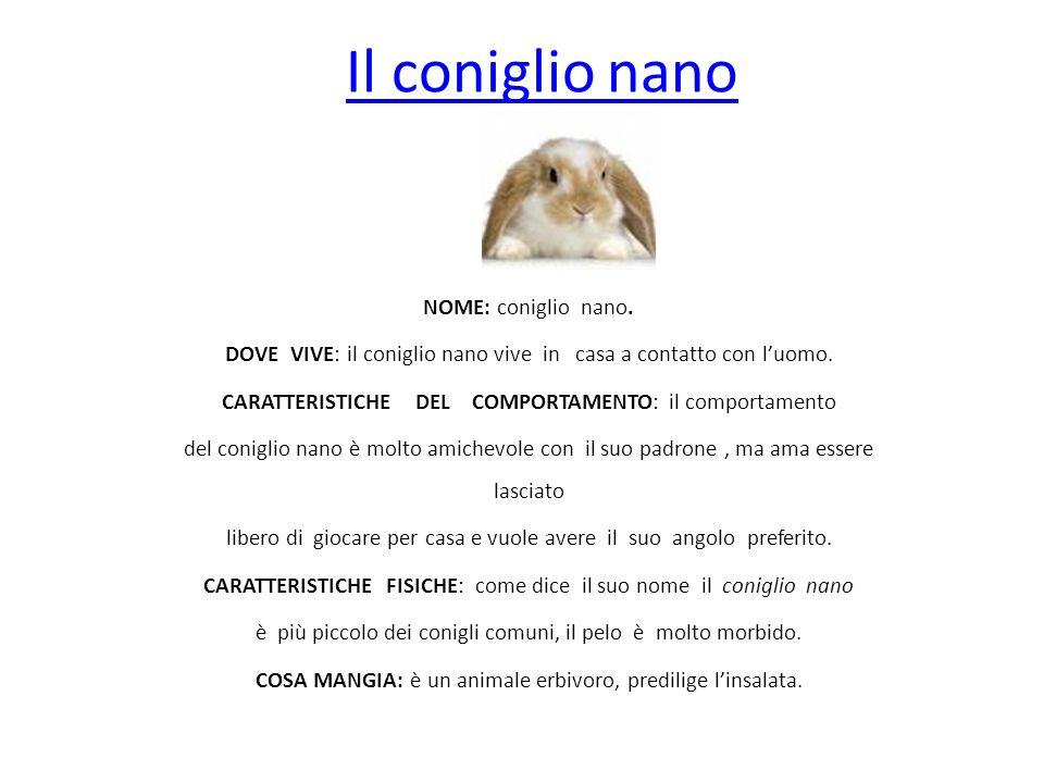 Il coniglio nano NOME: coniglio nano. DOVE VIVE: il coniglio nano vive in casa a contatto con luomo. CARATTERISTICHE DEL COMPORTAMENTO: il comportamen