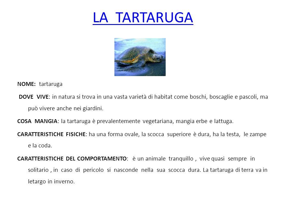 LA TARTARUGA NOME: tartaruga DOVE VIVE: in natura si trova in una vasta varietà di habitat come boschi, boscaglie e pascoli, ma può vivere anche nei g