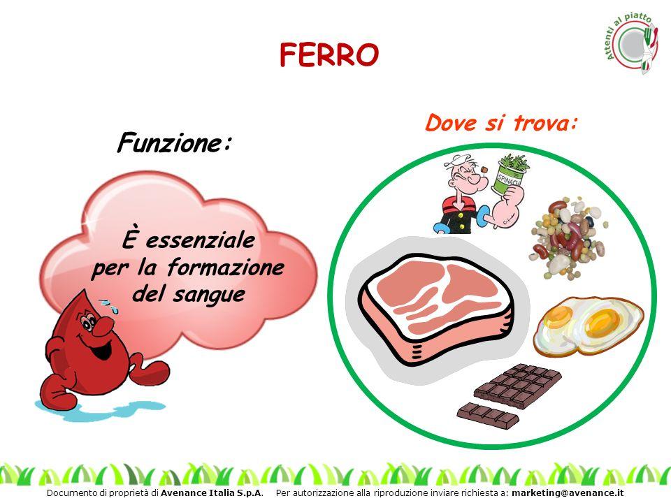 Documento di proprietà di Avenance Italia S.p.A. Per autorizzazione alla riproduzione inviare richiesta a: marketing@avenance.it FERRO Funzione: È ess