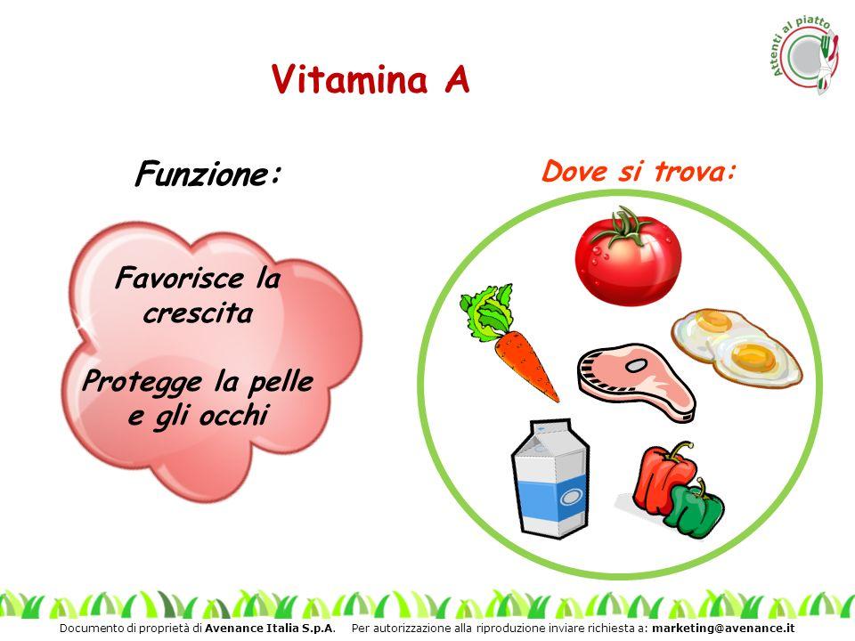 Documento di proprietà di Avenance Italia S.p.A. Per autorizzazione alla riproduzione inviare richiesta a: marketing@avenance.it Vitamina A Funzione: