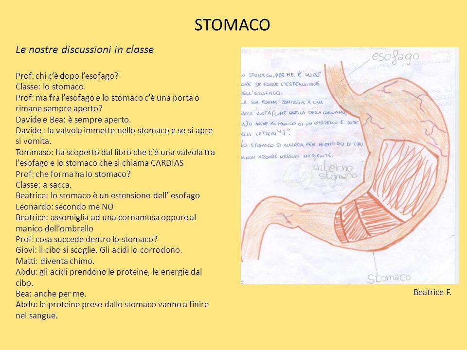 STOMACO Le nostre discussioni in classe Prof: chi cè dopo lesofago? Classe: lo stomaco. Prof: ma fra lesofago e lo stomaco cè una porta o rimane sempr