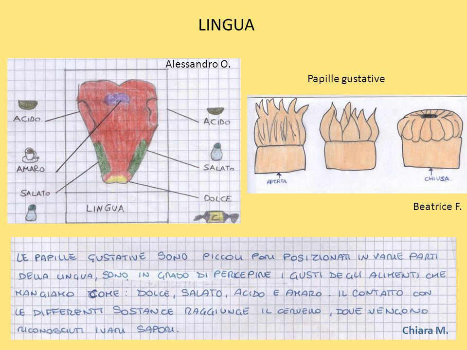 LINGUA Chiara M. Alessandro O. Papille gustative Beatrice F.