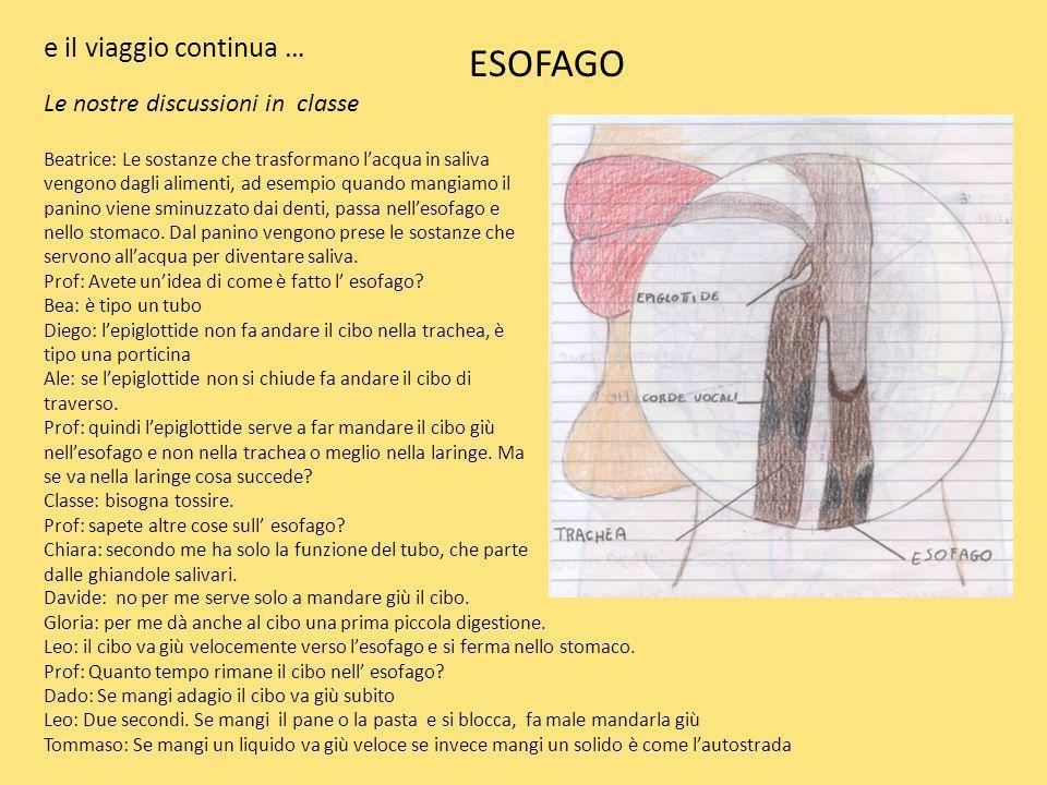 Prof: come è disposto l esofago.