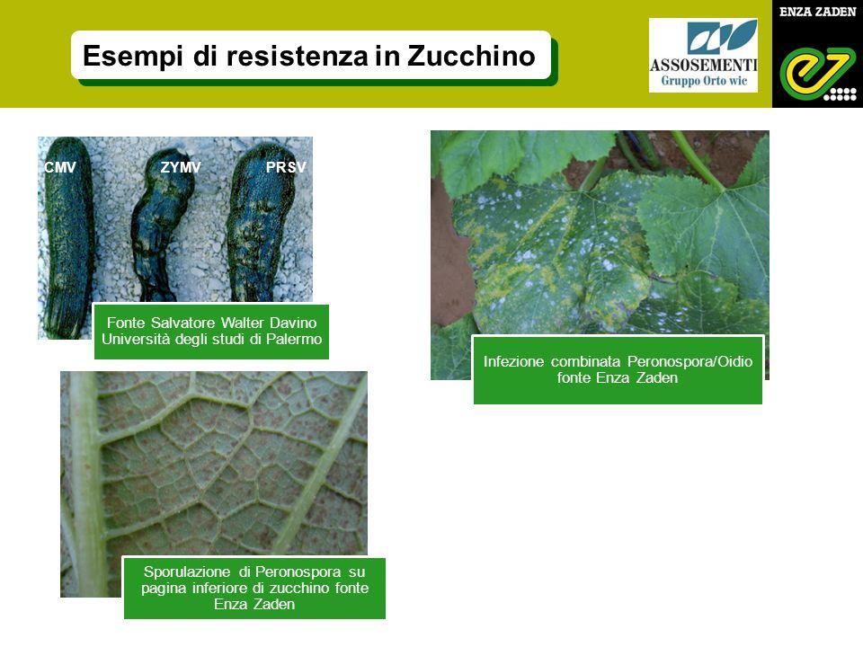 Fonte Salvatore Walter Davino Università degli studi di Palermo Esempi di resistenza in Zucchino CMV ZYMV PRSV Infezione combinata Peronospora/Oidio f