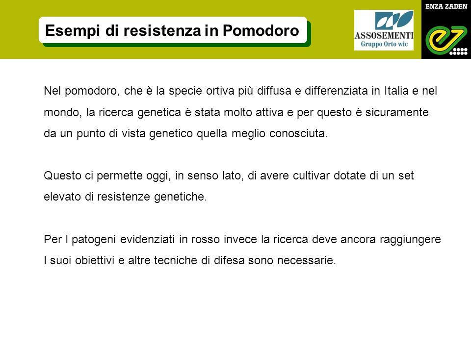 Nel pomodoro, che è la specie ortiva più diffusa e differenziata in Italia e nel mondo, la ricerca genetica è stata molto attiva e per questo è sicura