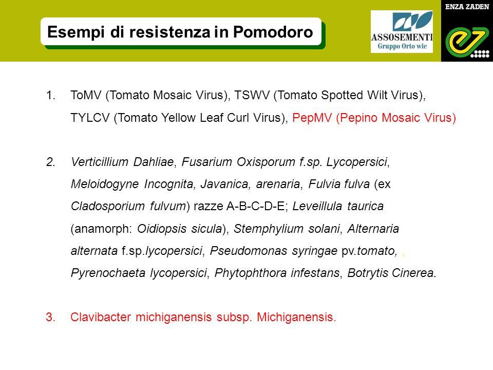 1.ToMV (Tomato Mosaic Virus), TSWV (Tomato Spotted Wilt Virus), TYLCV (Tomato Yellow Leaf Curl Virus), PepMV (Pepino Mosaic Virus) 2.Verticillium Dahl