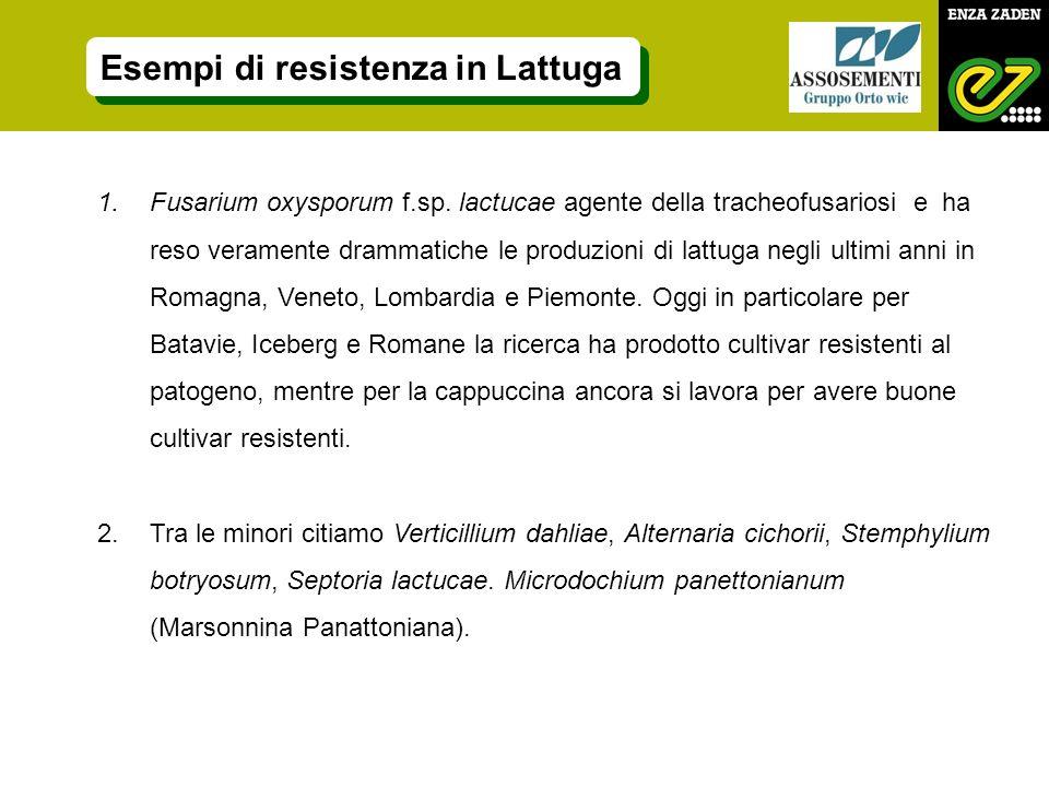1.Fusarium oxysporum f.sp. lactucae agente della tracheofusariosi e ha reso veramente drammatiche le produzioni di lattuga negli ultimi anni in Romagn