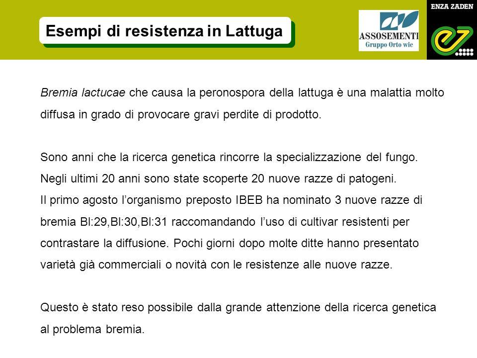 Bremia lactucae che causa la peronospora della lattuga è una malattia molto diffusa in grado di provocare gravi perdite di prodotto.
