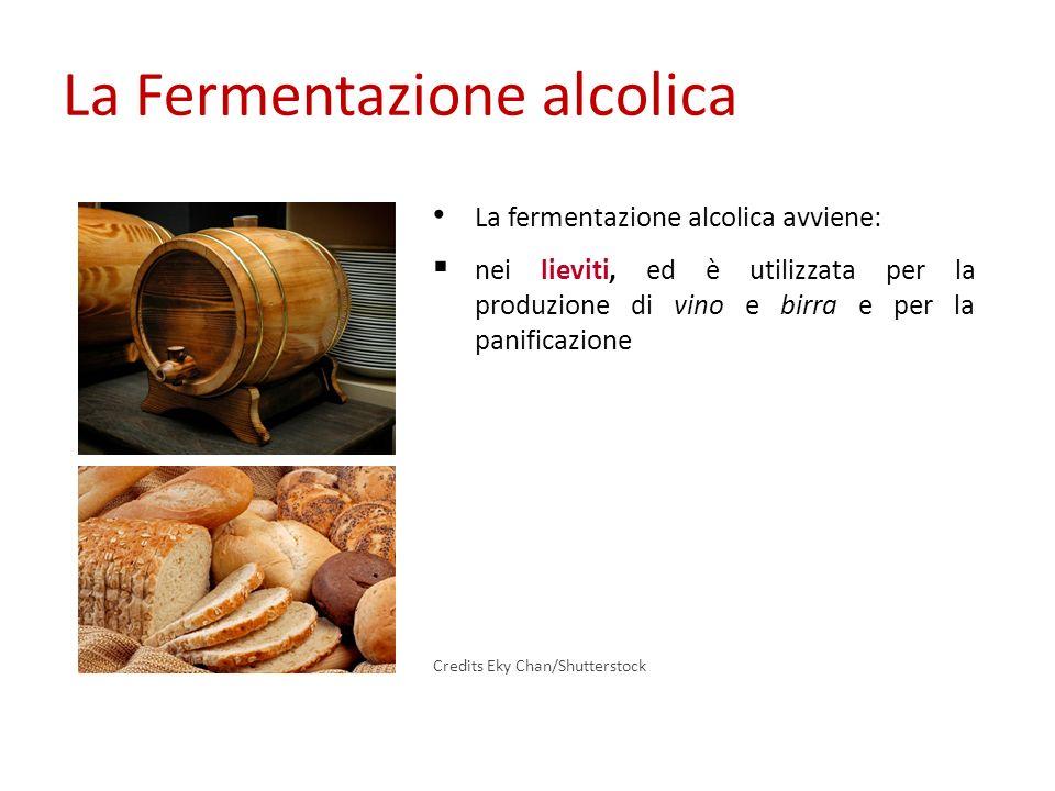La Fermentazione alcolica La fermentazione alcolica avviene: nei lieviti, ed è utilizzata per la produzione di vino e birra e per la panificazione Cre