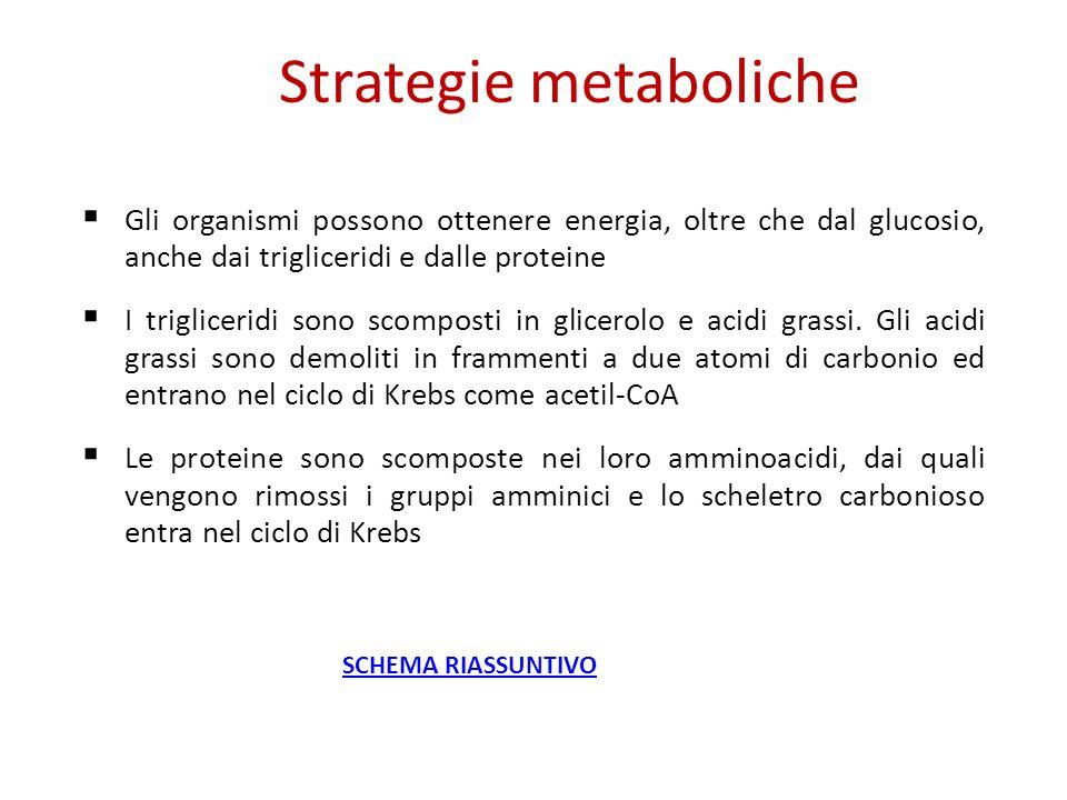 Gli organismi possono ottenere energia, oltre che dal glucosio, anche dai trigliceridi e dalle proteine I trigliceridi sono scomposti in glicerolo e a