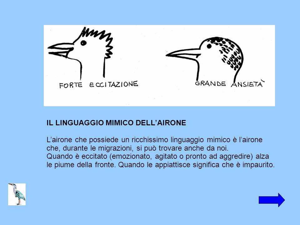 IL LINGUAGGIO MIMICO DELLAIRONE Lairone che possiede un ricchissimo linguaggio mimico è lairone che, durante le migrazioni, si può trovare anche da no