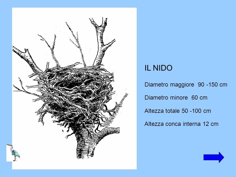 IL NIDO Diametro maggiore 90 -150 cm Diametro minore 60 cm Altezza totale 50 -100 cm Altezza conca interna 12 cm