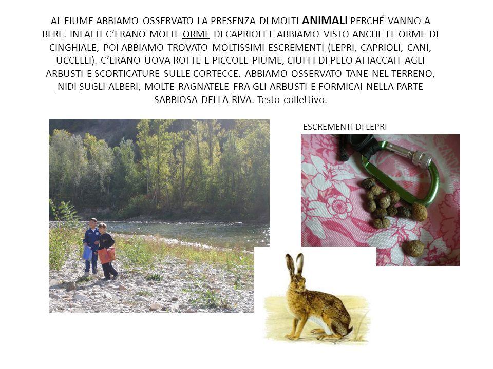 AL FIUME ABBIAMO OSSERVATO LA PRESENZA DI MOLTI ANIMALI PERCHÉ VANNO A BERE. INFATTI CERANO MOLTE ORME DI CAPRIOLI E ABBIAMO VISTO ANCHE LE ORME DI CI