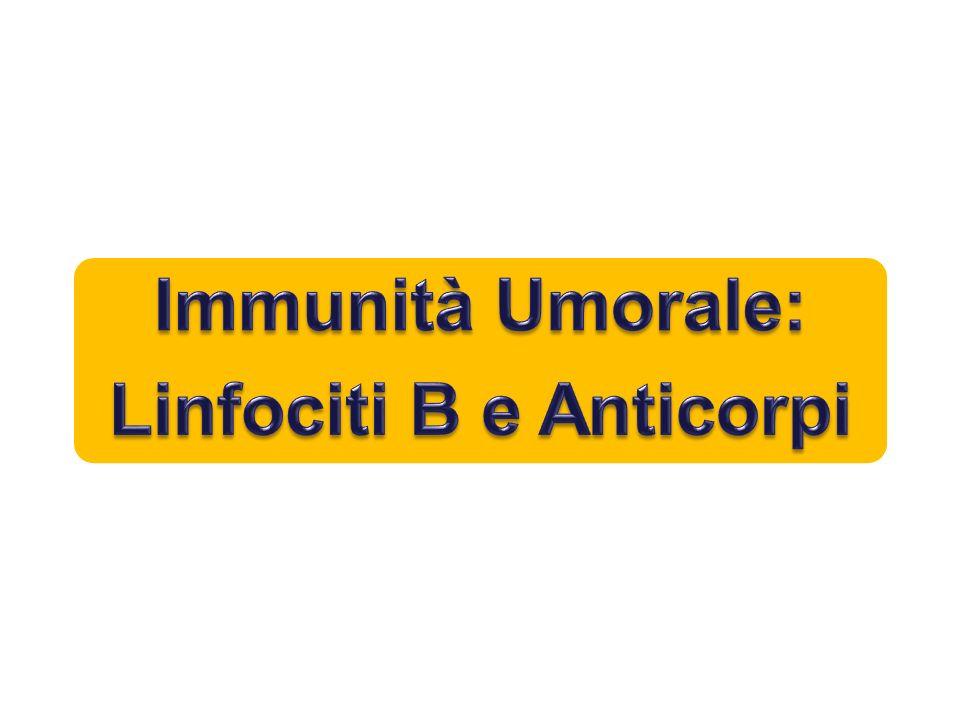 Immunità Umorale