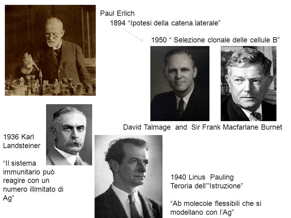 1894 Ipotesi della catena laterale 1950 Selezione clonale delle cellule B David Talmage and Sir Frank Macfarlane Burnet Paul Erlich 1936 Karl Landstei