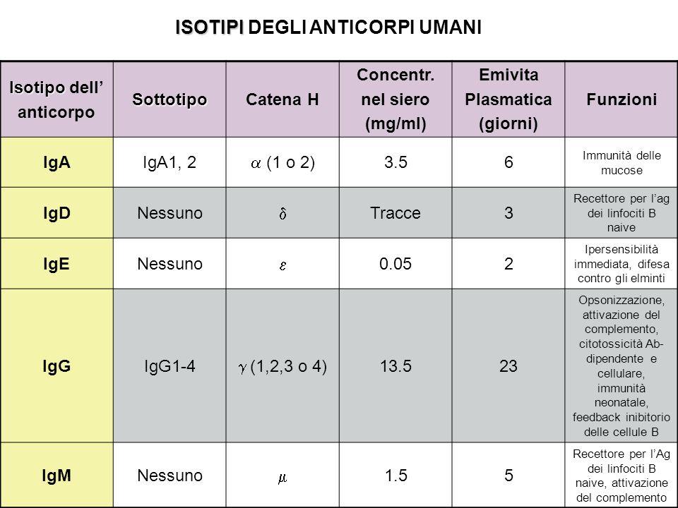 Isotipo Isotipo dell anticorpoSottotipoCatena H Concentr. nel siero (mg/ml) Emivita Plasmatica (giorni) Funzioni IgAIgA1, 2 (1 o 2) 3.56 Immunità dell