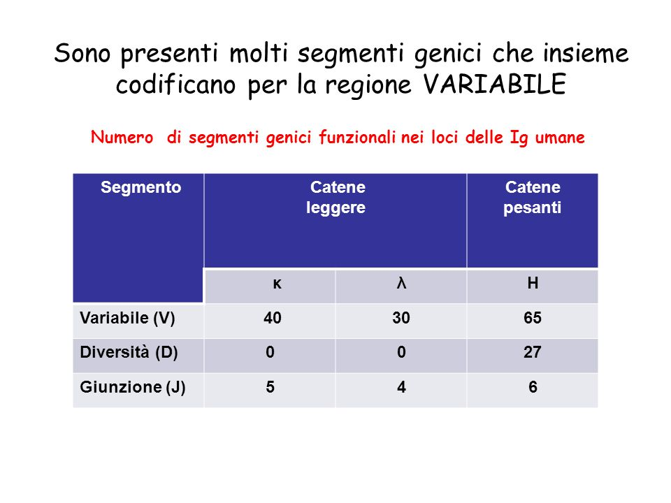 La RICOMBINAZIONE V(D)J Coinvolge enzimi linfocitari Specifici Ubiquitari (DNA ligasi) e DNA Ku La RICOMBINAZIONE V(D)J Coinvolge enzimi linfocitari Specifici Ubiquitari (DNA ligasi) e DNA Ku V(D)J RICOMBINASI: RAG-1 e RAG-2 (Specifici per il sistema linfoide)
