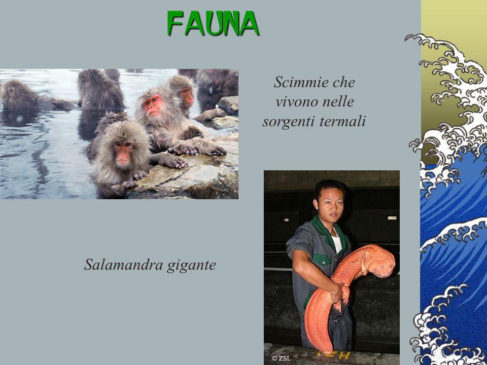 FAUNA Scimmie che vivono nelle sorgenti termali Salamandra gigante