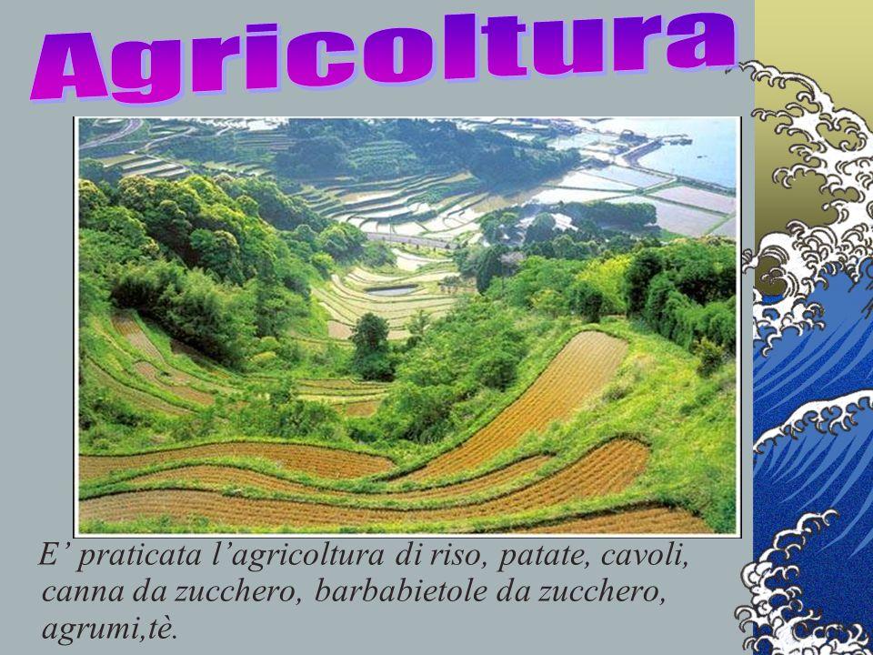 E praticata lagricoltura di riso, patate, cavoli, canna da zucchero, barbabietole da zucchero, agrumi,tè.