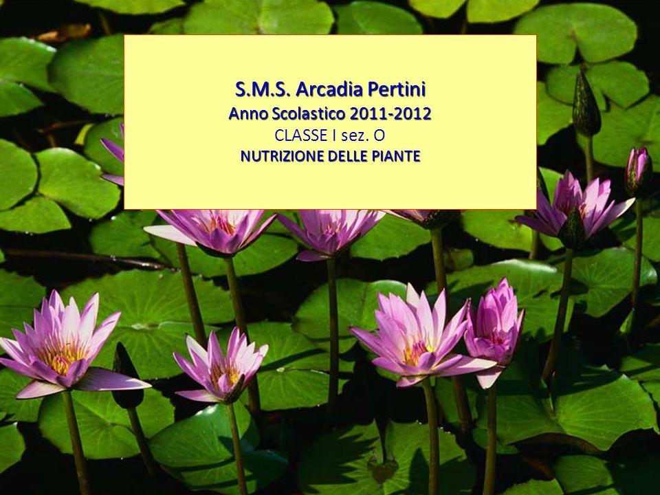 S.M.S. Arcadia Pertini Anno Scolastico 2011-2012 CLASSE I sez. O NUTRIZIONE DELLE PIANTE