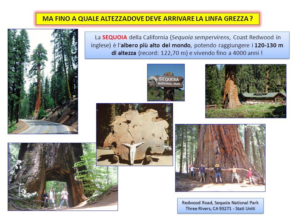 La più alta pianta del mondo è una SEQUIOA alta 122,7 m.