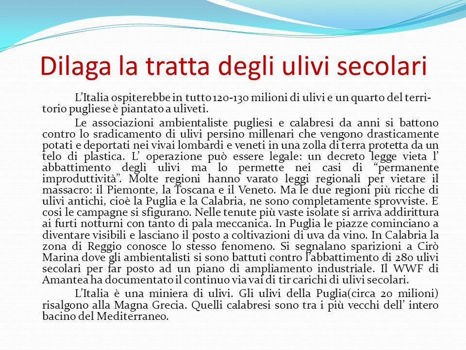 Dilaga la tratta degli ulivi secolari LItalia ospiterebbe in tutto 120-130 milioni di ulivi e un quarto del terri- torio pugliese è piantato a uliveti.