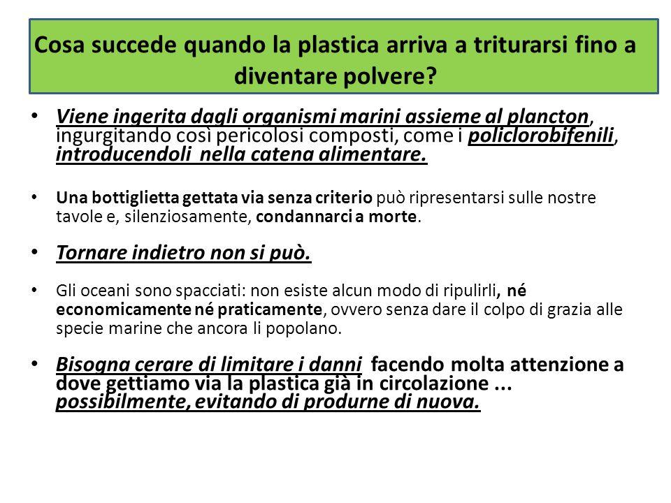 Cosa succede quando la plastica arriva a triturarsi fino a diventare polvere? Viene ingerita dagli organismi marini assieme al plancton, ingurgitando
