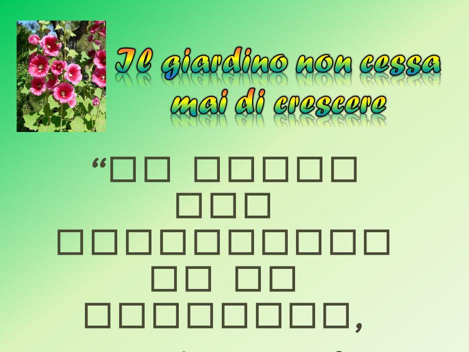 Nome comune: Salvia Specie: Salvia officinalis Descrizione: originaria del bacino del Mar Mediterraneo, in Italia può essere trovata allo stato spontaneo; è un piccolo arbusto sempreverde.