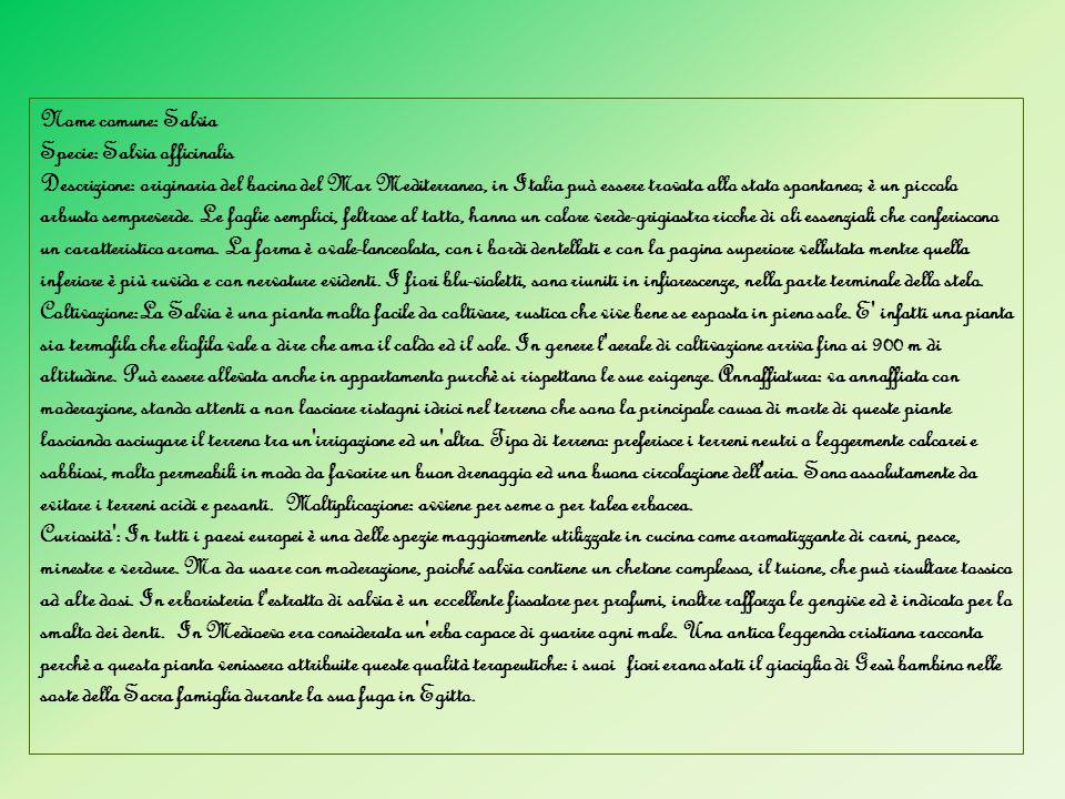 Riconoscimento delle piante e animali Tassonomia Vetrine espositive