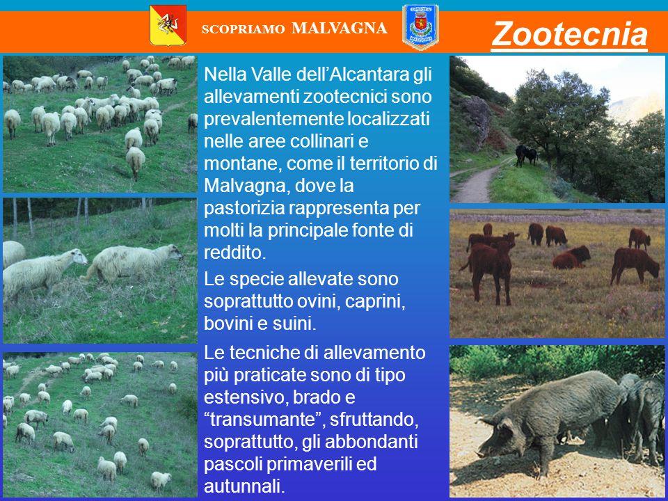 Zootecnia Nella Valle dellAlcantara gli allevamenti zootecnici sono prevalentemente localizzati nelle aree collinari e montane, come il territorio di