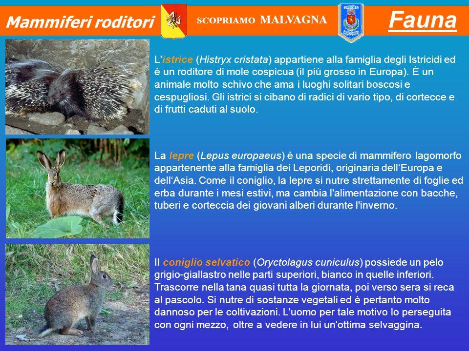 Fauna Mammiferi roditori L'istrice (Histryx cristata) appartiene alla famiglia degli Istricidi ed è un roditore di mole cospicua (il più grosso in Eur