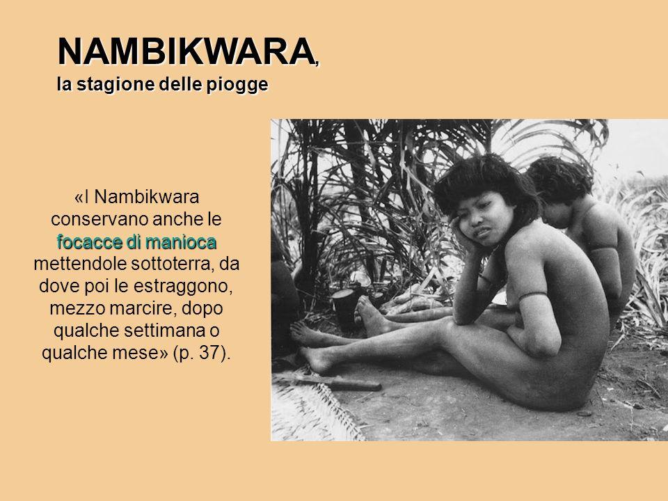 NAMBIKWARA, la stagione delle piogge focacce di manioca «I Nambikwara conservano anche le focacce di manioca mettendole sottoterra, da dove poi le est