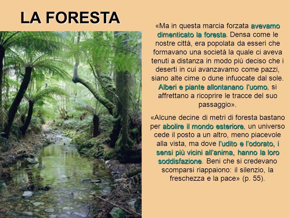 avevamo dimenticato la foresta Alberi e piante allontanano luomo «Ma in questa marcia forzata avevamo dimenticato la foresta. Densa come le nostre cit