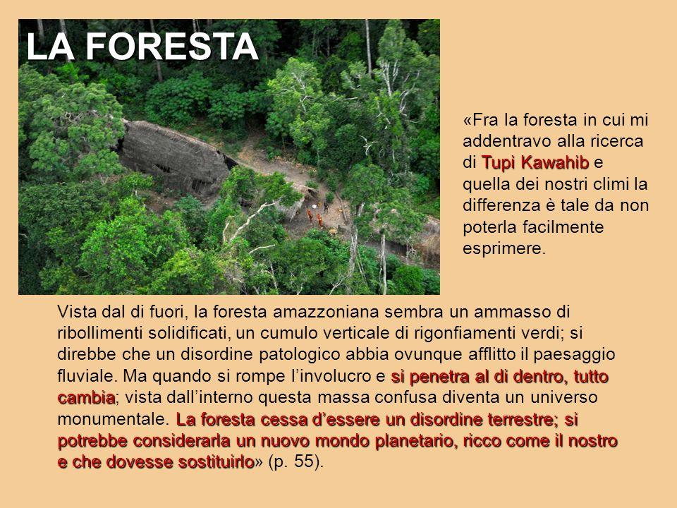 Tupi Kawahib «Fra la foresta in cui mi addentravo alla ricerca di Tupi Kawahib e quella dei nostri climi la differenza è tale da non poterla facilment