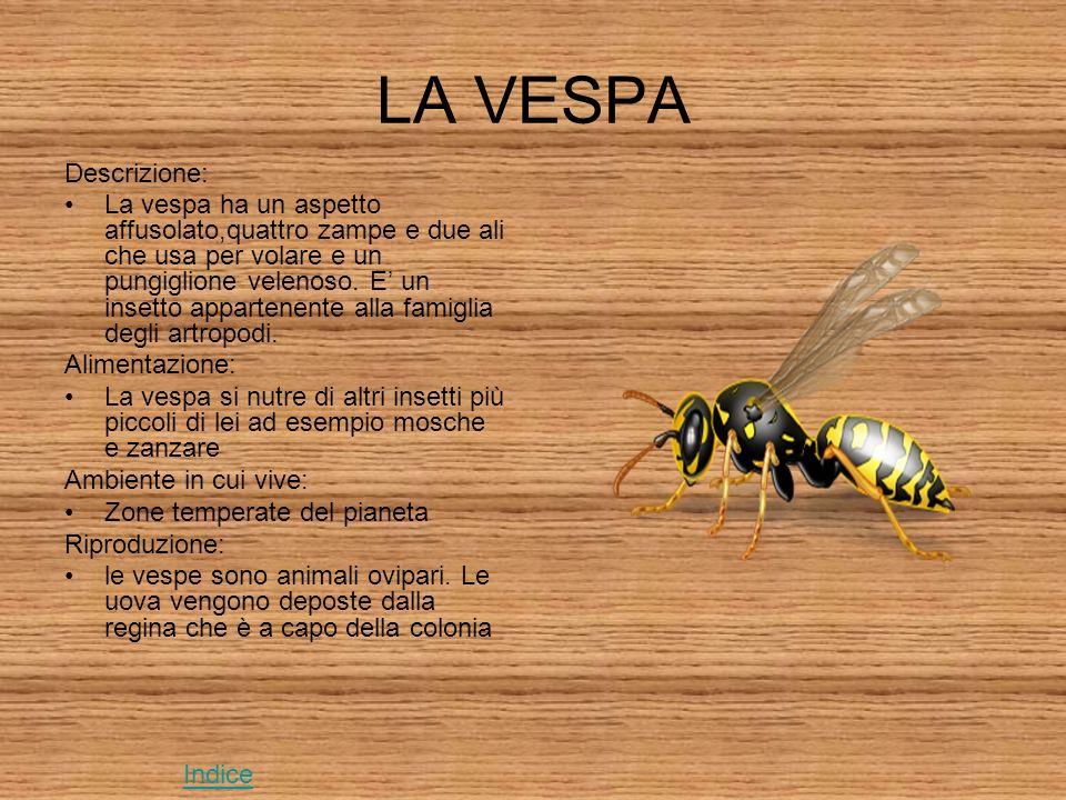 LA VESPA Descrizione: La vespa ha un aspetto affusolato,quattro zampe e due ali che usa per volare e un pungiglione velenoso.