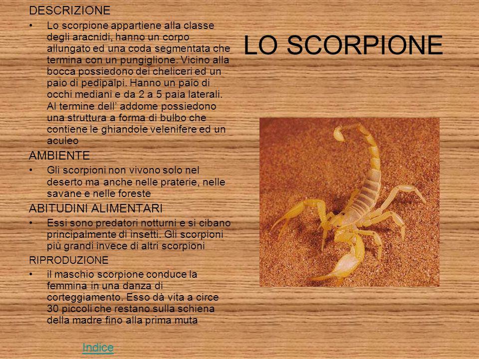 LO SCORPIONE DESCRIZIONE Lo scorpione appartiene alla classe degli aracnidi, hanno un corpo allungato ed una coda segmentata che termina con un pungiglione.
