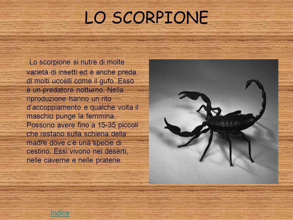 LO SCORPIONE Lo scorpione si nutre di molte varietà di insetti ed è anche preda di molti uccelli come il gufo.