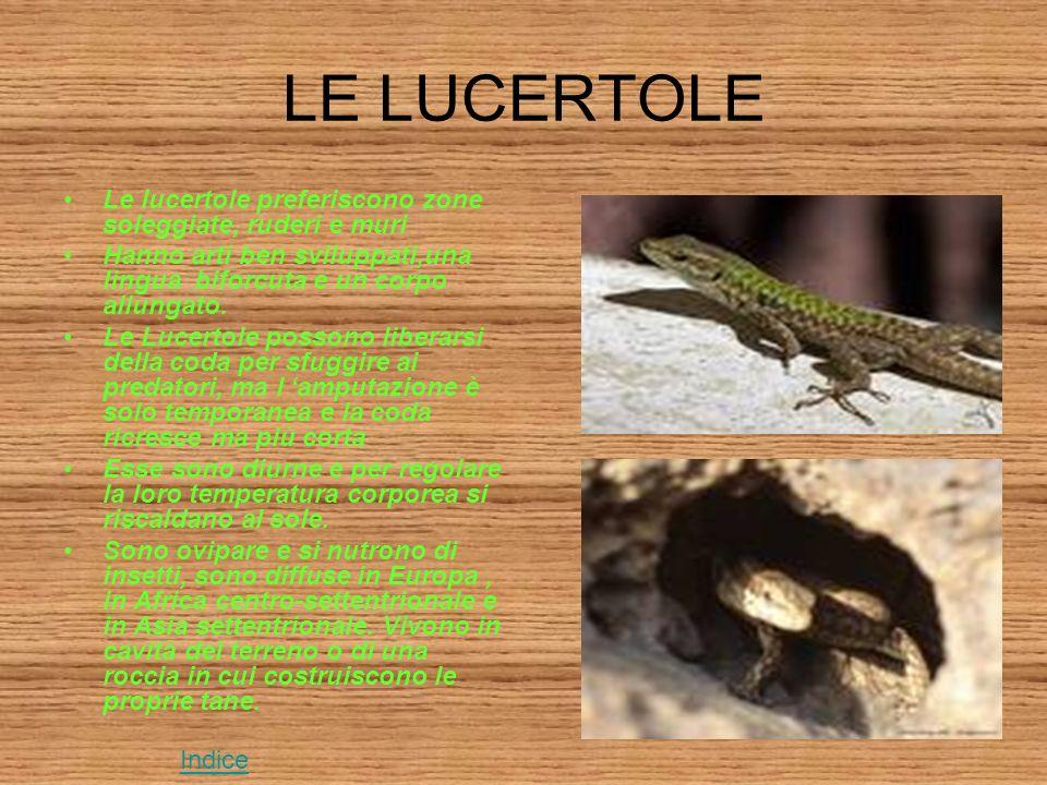 LE LUCERTOLE Le lucertole preferiscono zone soleggiate, ruderi e muri Hanno arti ben sviluppati,una lingua biforcuta e un corpo allungato.