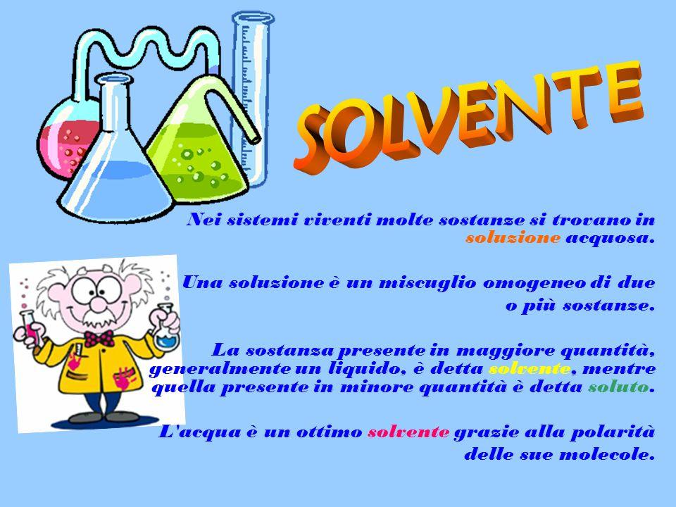 Nei sistemi viventi molte sostanze si trovano in soluzione acquosa. Una soluzione è un miscuglio omogeneo di due o più sostanze. La sostanza presente
