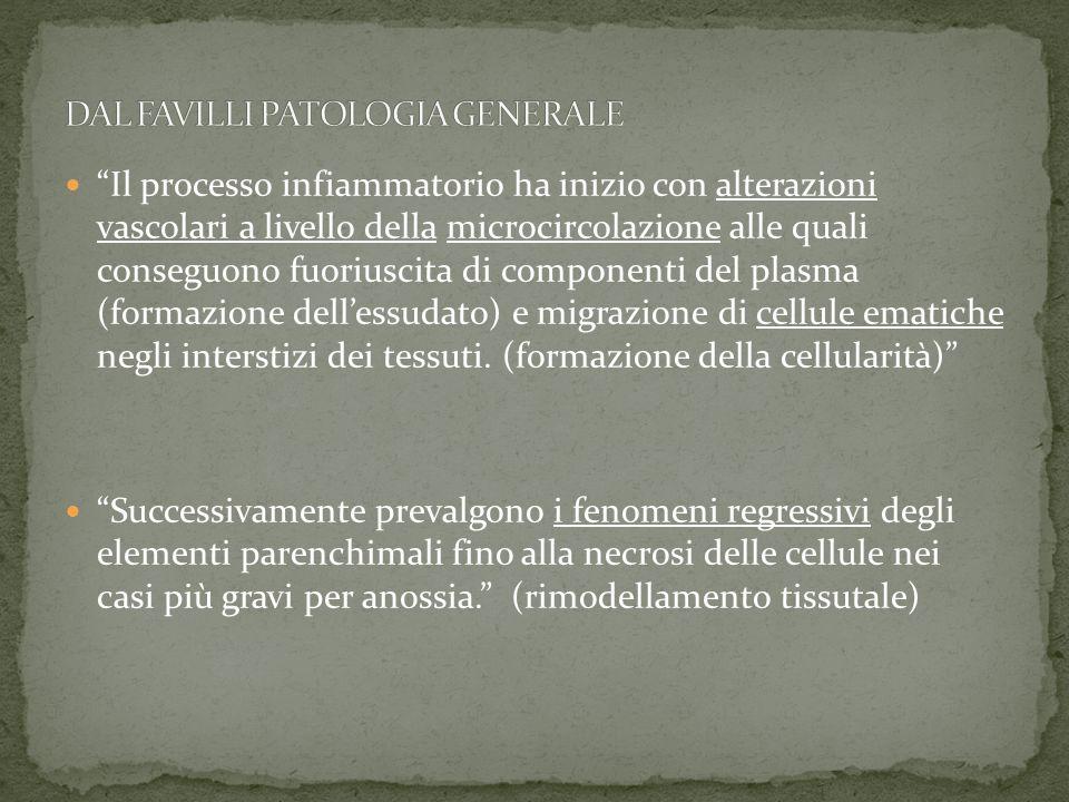 Il processo infiammatorio ha inizio con alterazioni vascolari a livello della microcircolazione alle quali conseguono fuoriuscita di componenti del pl